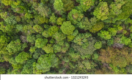 Aerial top view forest, Natural park background
