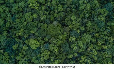 Imágenes Fotos De Stock Y Vectores Sobre Tropical Forest