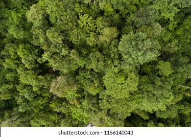 Aerial top view green forest for background