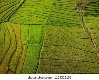 Aerial top view green rice field terrace; Yogyakarta, Indonesia - 15 July 2018