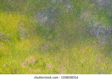Aerial top view of Natural grass texture