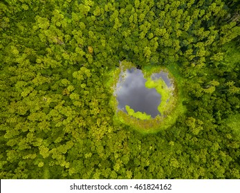 Aerial top view perspective of Trou Aux Cerf Volcano Curipipe in the tropical island jungle of Mauritius