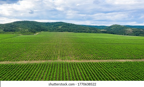 Aerial top view of vineyards landscape from above background, Bulgaria.