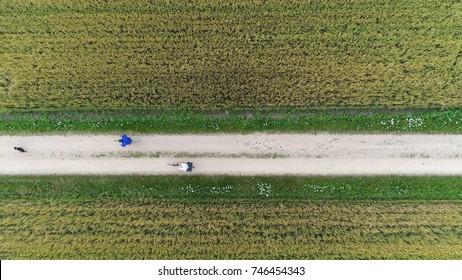 Aerial top-down photo of bike path rural road showing dog running followed by two cyclists slowly cycling over unpaved road beautiful rural scene people enjoying nice outside weather and workout