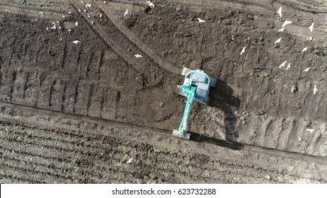 Aerial top-down view of hydraulic excavator digging in brown soil  sand surface heavy construction vehicle on tracks also showing flock of seagulls looking for food