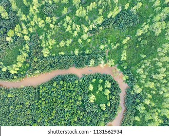 Aerial top-down view of the river and jungle with palms, forest, trees and klotok boat in East Kalimantan (Borneo) - Kumai, Tanjung Puting national park and Camp Leakey
