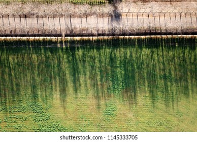 aerial of tree shadows from above