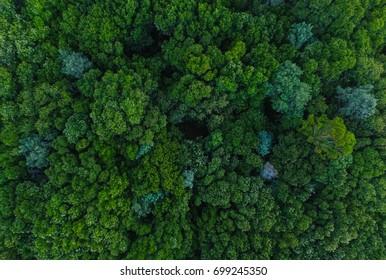 Aerial Trees