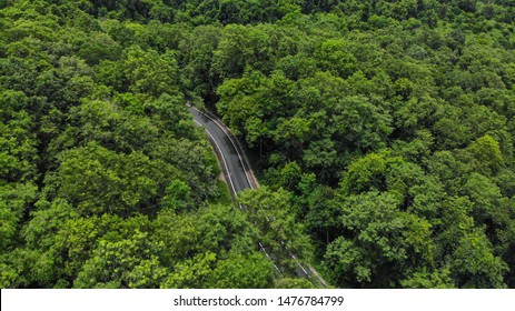 Aerial veiw of empty road in evergreen forest road