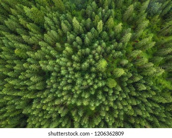 aerial veiw of green forest. drone shot