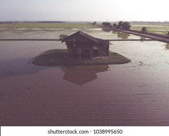 Aerial view of abandoned old wooden house in the middle of paddy field