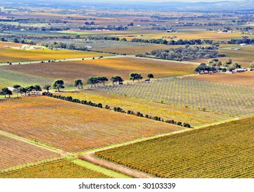 Aerial view of Agricultural Grape Vines and Orchards in Autumn, Aldinga, South Australia
