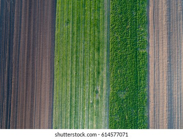 Aerial view of agricultural parcels with furrows and green lands in spring shot with drone directly above