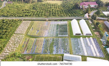 Aerial view of Agricultural plots, Allotment plot in Spring, prepared for planting. An allotment is a plot of land rented and used to grow your own vegetables.