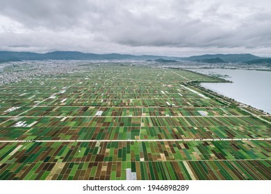 aerial view of agricultural plots of land under cultivation in Vegetable Plants near Kunming, China