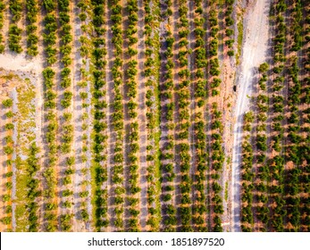 Aerial view of almond fields at Mare de Deu de la Roca de Mont-roig in Spain, vast hilltop hiking destination with rocky climbing areas, panoramic views and a historic church