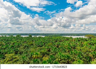 Aerial view of the Amazon Rainforest and the Napo River, Yasuni national park, Ecuador.