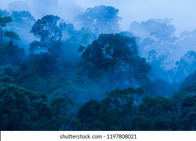 Aerial view, Ancient tropical forest in the mist, beautiful morning light. The art of shaping a forest in rainy. Blue tone. Khao Yai National Park. UNESCO The World Heritage Site.