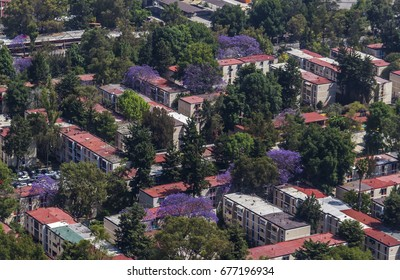 aerial view of apartment block and purple blooming jacaranda trees in Mexico City