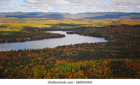 Aerial view of  autumn forest in different colors, season changing, ecology
