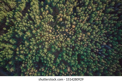 Aerial view of autumn in sunlight. Unmanned view of the Park with trees. the texture of the forest