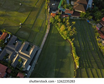 Aerial view of Bali - Canggu and Rice Fields