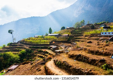 Aerial view of beautiful green and colorful rice field terraces, Himalayas, Nepal on Annapurna Circuit Trail - popular tourist hiking trail