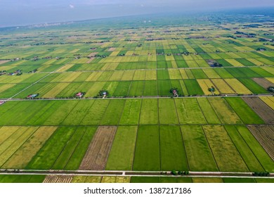 Aerial view of the beautiful green paddy field during the growing season of rice started in Tanjung Karang, Selangor, Malaysia