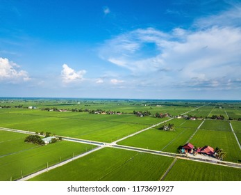 Aerial view of beautiful green rice paddy field in Sekinchan, Selangor. Drone shooting photography.