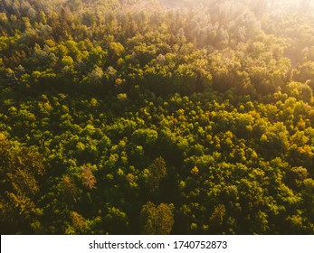 Aerial view of a beautiful morning forest in Bavaria. The sun illuminates a breathtaking german forest. Bird's eye view near Munich