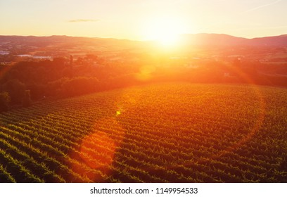 Aerial view of beautiful rows of vineyards in picturesque valley at sunset of golden sun. Growing grapes for wine production in homestead entrepreneur in Tuscany. Favorable climate in wine region