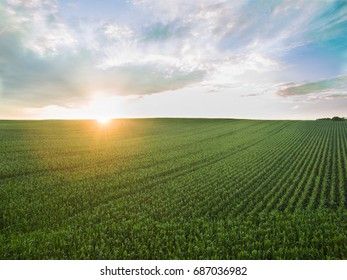 aerial view of a beautiful sunset over green  corn fields - agricultural fields