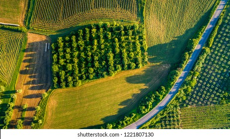 Aerial view of beautiful trees and road on a sunny day