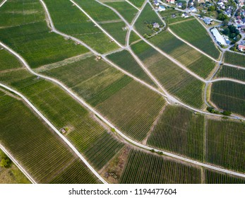 Aerial view of beautiful wineyards landscape with village from drone