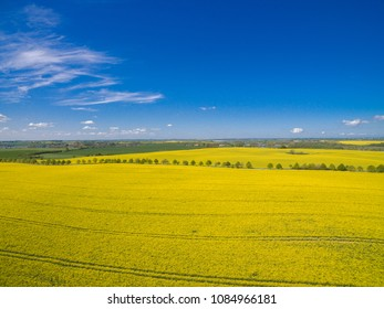 Aerial view of beautiful yellow flowering bright rape fields on a sunny day with blue sky