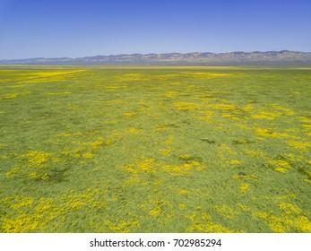 Aerial view of the beautiful yellow goldifelds blossom at Carrizo Plain National Monument, California, U.S.A.
