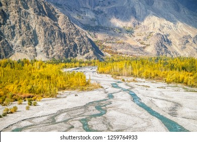 Aerial view of blue water of river flowing through white sand and yellow leaves trees in autumn with mountain in the background. Skardu, Gilgit Baltistan, Pakistan.