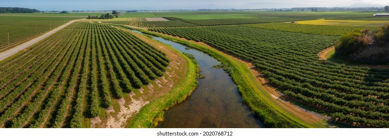 Aerial View of Blueberry Fields in the Skagit Valley. Over 90 different crops are grown in Skagit County. More tulip, iris, and daffodil bulbs are produced here than in any other county in the U.S.