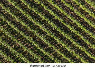 aerial view of the blueberry orchard in Poland