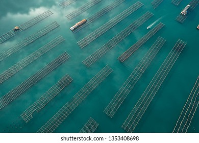 Aerial view of a boat cruising through oyster farms at the Ebro River Delta in Catalonia, Spain