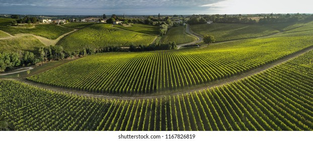 Aerial view Bordeaux Vineyard at sunrise, Entre deux mers, Langoiran, Gironde