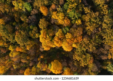 Aerial view of bright autumn forest as background. Golden foliage