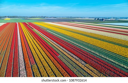 Aerial view of bulb-fields in springtime, located between the towns of Lisse and Sassenheim, province of Zuid-Holland, the Netherlands