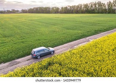 Aerial view of car driving by straight ground road through green fields with blooming rapeseed plants on sunny day. Drone photography.