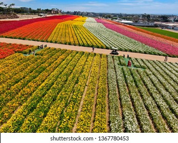 Aerial view of Carlsbad Flower Fields. tourist can enjoy hillsides of colorful Giant Ranunculus flowers during the annual bloom that runs March through mid May. Carlsbad, California, USA. 03/22/2019