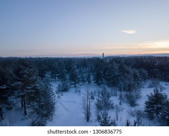 Aerial view of city Tallinn with winter forest