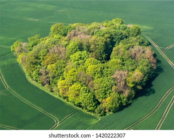 aerial view of a clump of trees at Serans in the department of Oise in France