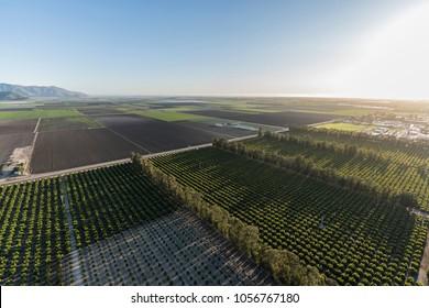 Aerial view of coastal farm fields and orchards near Camarillo in Ventura County, California.