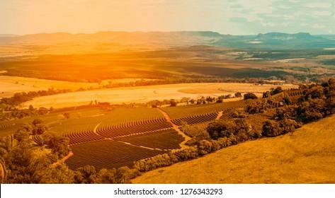 aerial view of coffee farm field
