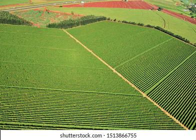 aerial view of coffee plantation